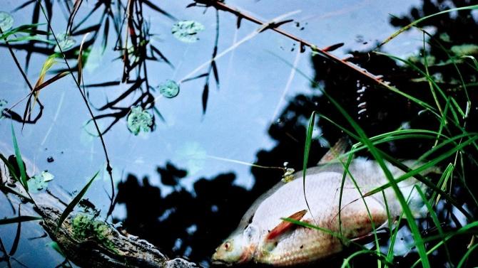 """Екоинспектори проверяват сигнал за мъртва риба в язовир """"Крива круша"""" край Черноморец"""