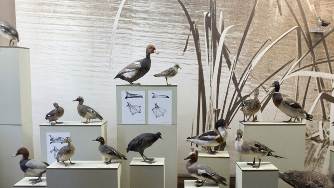 За първи път музеят в Плевен показа ценно дарение от