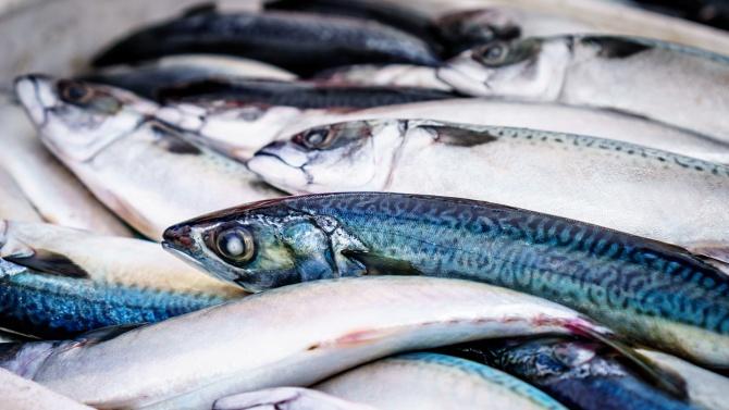 Тонове мъртва риба изплува от язовир край Черноморец. Някои от