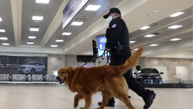 Кучета, обучени да засичат новия коронавирус, започнаха да работят по