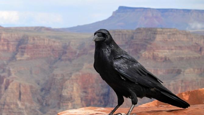 Птиците могат да мислят, твърдят две публикации в американското научно