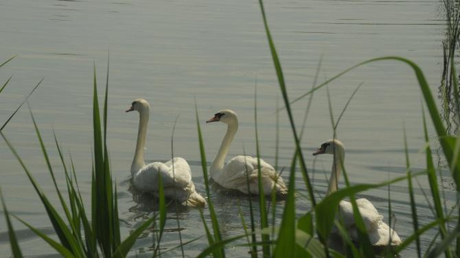 """Хванаха бракониери в езерото """"Сребърна"""""""