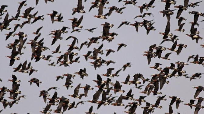Честваме Европейските дни на птиците този уикенд