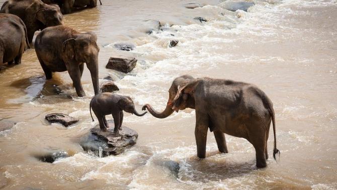 Бактериална болест причинява масовата смърт на слонове в Зимбабве