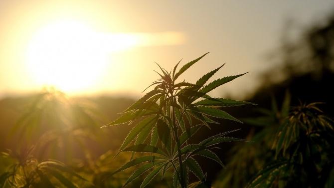 Спипаха двама с 16 кг марихуана