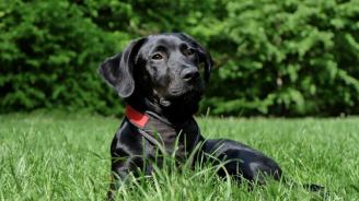 Кучета асистенти помагат на деца с диабет
