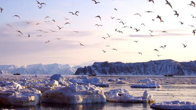 Mасово измират морските животни в Камчатка