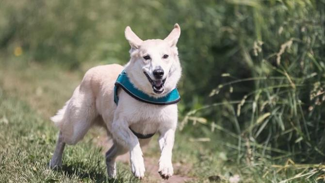 За пръв път община Монтана е събрала значителни средства от такси за кучета