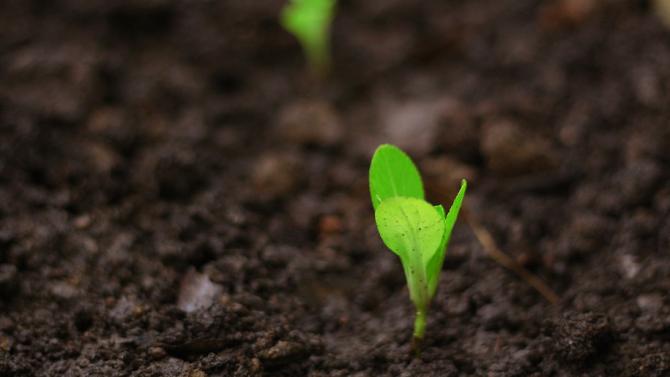 Fibank с нов продукт в подкрепа на българските земеделци