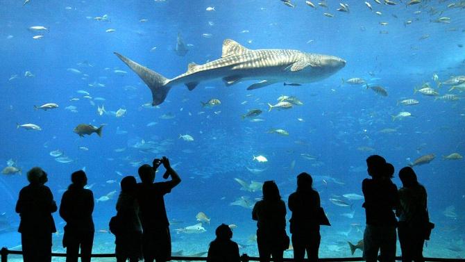 Аквариум в Хонконг предлага йога с акули