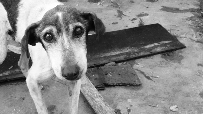 Нехуманни условия в приюта за кучета Каменар