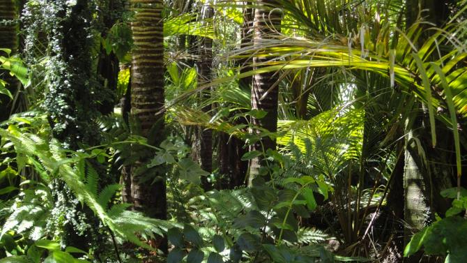 Изсичането на амазонските гори заплашва с нови пандемии