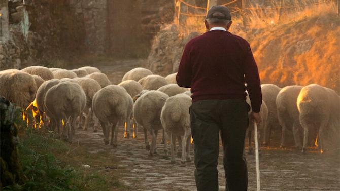 Овчар в Румъния се мъчи да докаже, че е жив