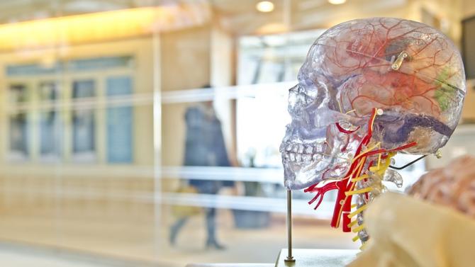 Хормонът на глада влияе на паметта