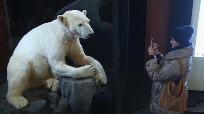 Екземпляри от редки и застрашени видове животни посрещат посетителите на музея в Плевен
