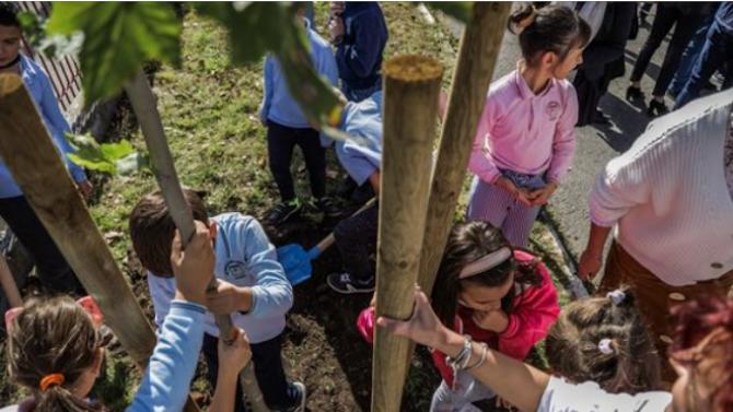 21 500 нови дръвчета ще бъдат посадени в Новата гора на София тази есен