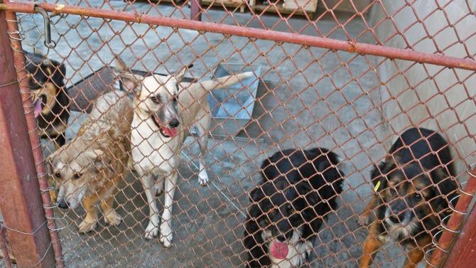 БАБХ спря дейността на незаконен развъдник в Белослав, в който е родено кучето Рая
