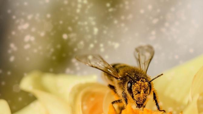 Започна приемът по пчеларската програма за 2021 г.