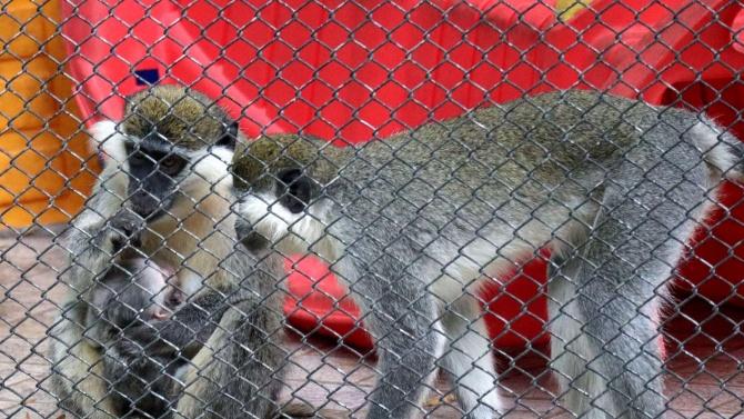 Ново бебе във варненския зоопарк