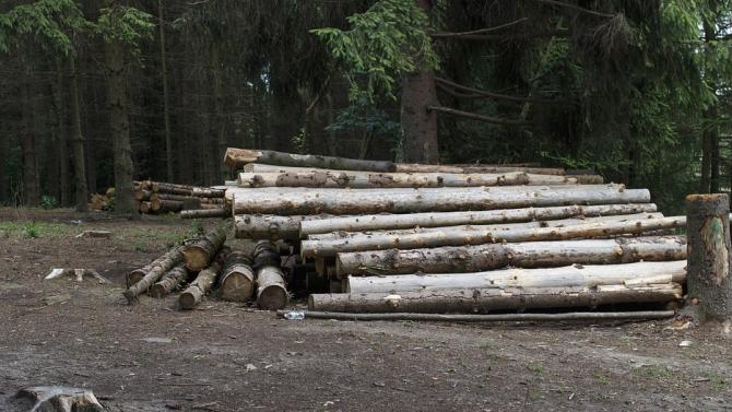 Спряна е сечта в частни гори в землището на с.Сърнево