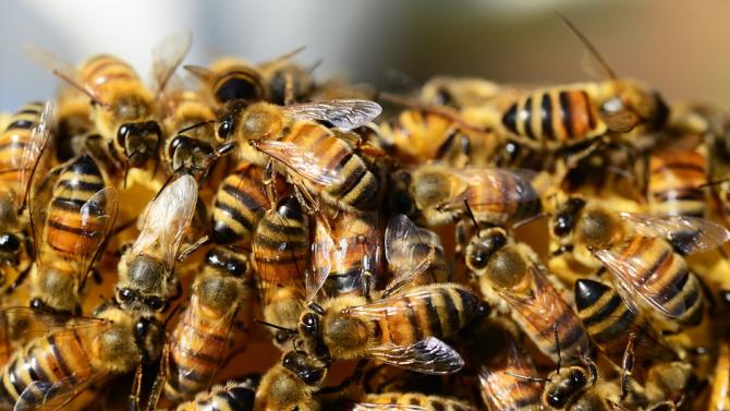 Мъж се покри с почти 64 кг пчели за рекорд на Гинес
