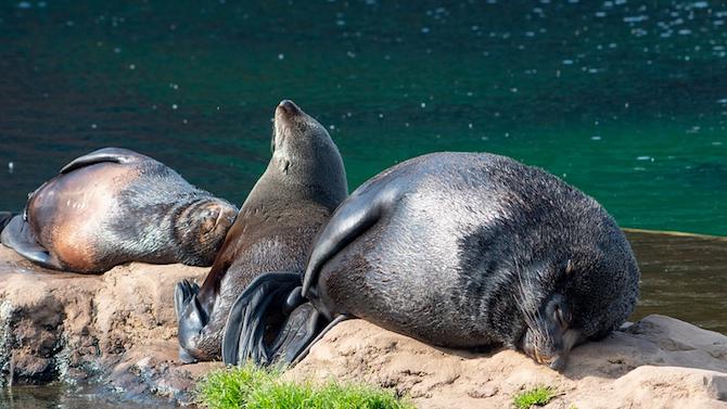 Масово измиране на тюлени в Намибия застрашава бъдещето на популацията