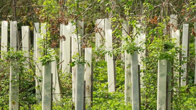 Нови 600 дървета ще бъдат засадени в шест района на