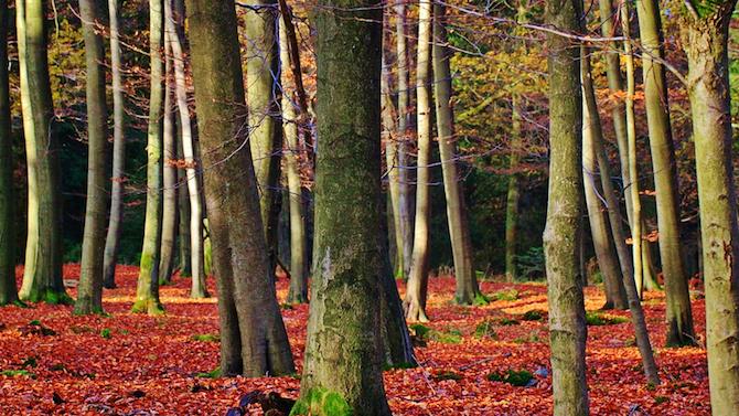 Най-ниските температури през ноември у нас ще бъдат между минус