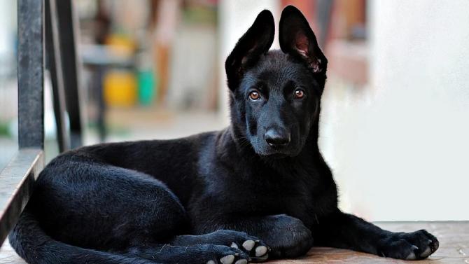 Ново проучване разкрива богатата история на кучетата