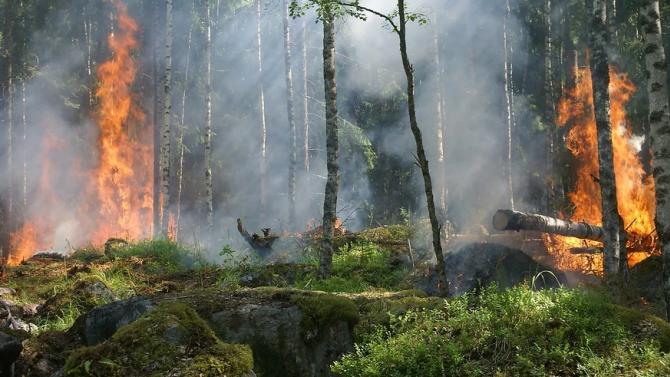 ЕК: Рекордно тежка година по отношение на горските пожари в Европа