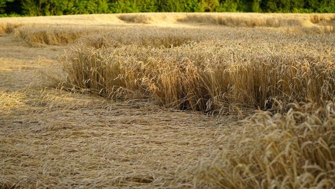 """Заявления за компенсиране на пропаднали площи се приемат от днес в ДФ """"Земеделие"""""""