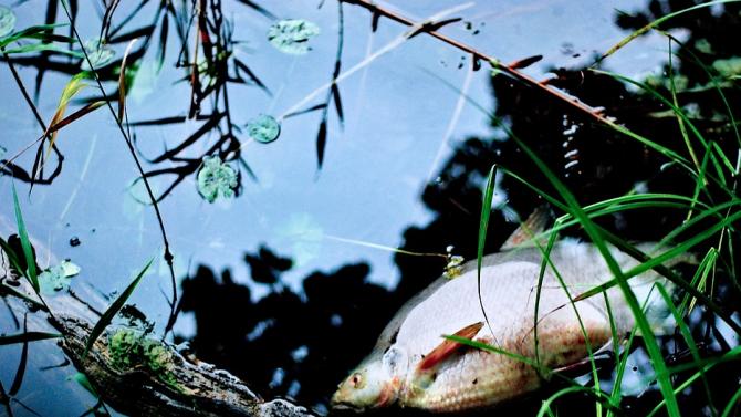 Мъртва риба заради източен язовир