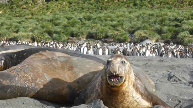 Гигантски айсберг застрашава животните на антрактическия остров Южна Джорджия