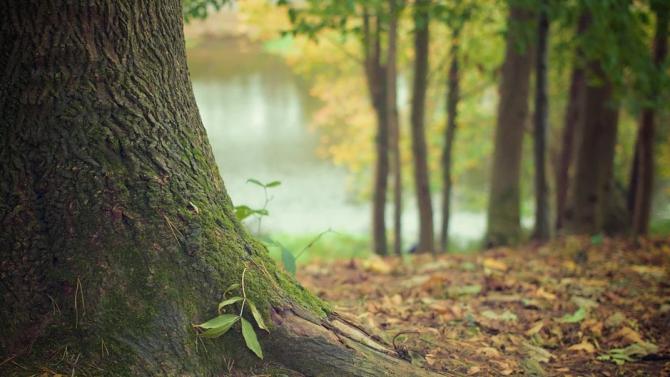 """Опасни дървета ще бъдат премахнати в природния парк """"Шуменско плато"""""""