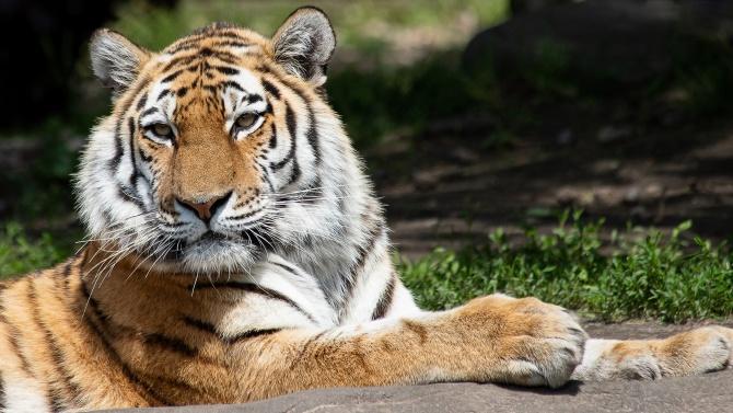 Софийският зоопарк започна подготовка за зимния пероиод. Още през октомври