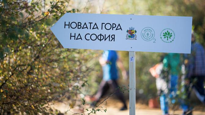 Близо 10 000 новозасадени дръвчета в Новата гора на София