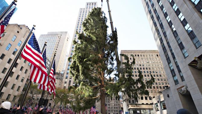 В Ню Йорк издигнаха коледното дърво на Рокфелер плаза