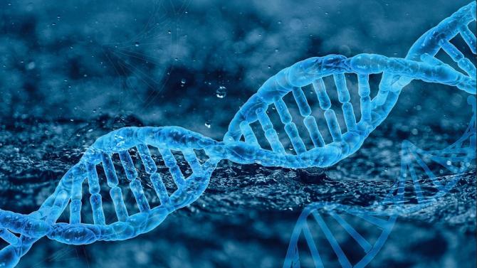 Учени частично обърнаха процеса на клетъчно стареене у хора