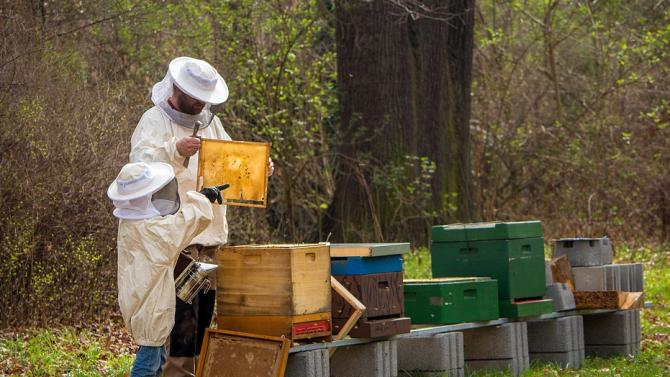 До 31 януари 2021 г. пчеларите и стопаните, обработващи площи със земеделски култури, трябва да се регистрират в оповестителната система за пръскания на БАБХ