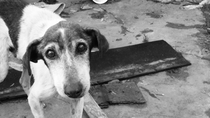 Пиян мъж застреля семейното куче пред очите на дъщеря си