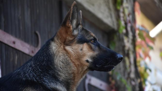 Ветeринари спасяват Барс - единственото в страната куче за издирване на отрови в природата