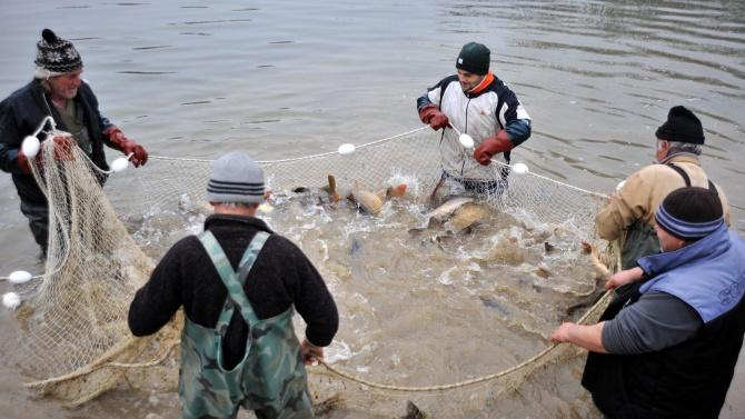 В село Попица напълниха мрежите с риба за Никулден