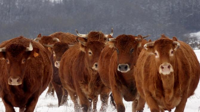 Определени са ставките за обвързано подпомагане за животни за 2020 година
