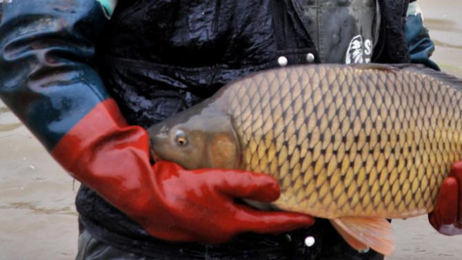 Прясна риба и морски дарове на 5 и 6 декември в София