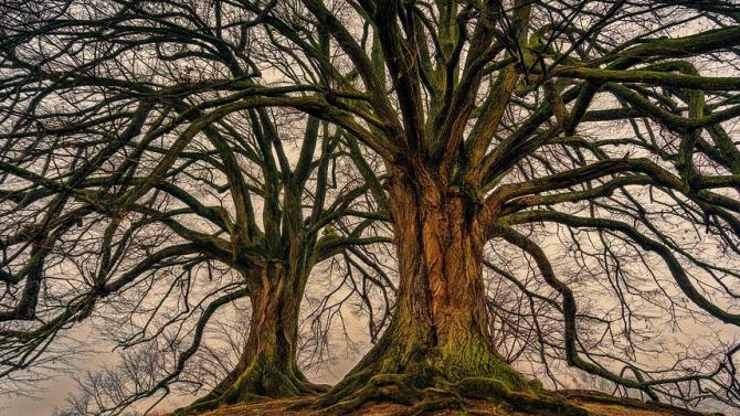 """Знакови дървета разказват своите истории чрез конкурса """"Дърво с корен 2020"""""""