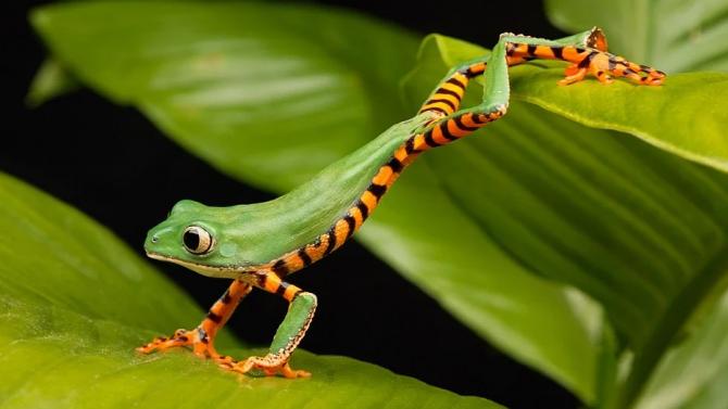 Климатичните промени застрашават земноводните видове