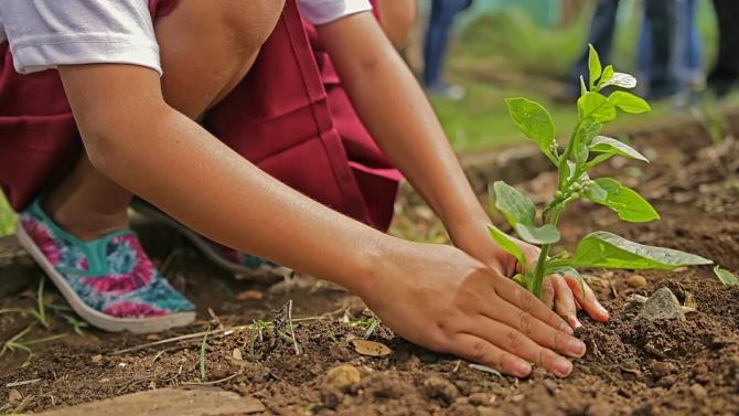 Повече от 100 дървета са засадени във Велико Търново през последните месеци