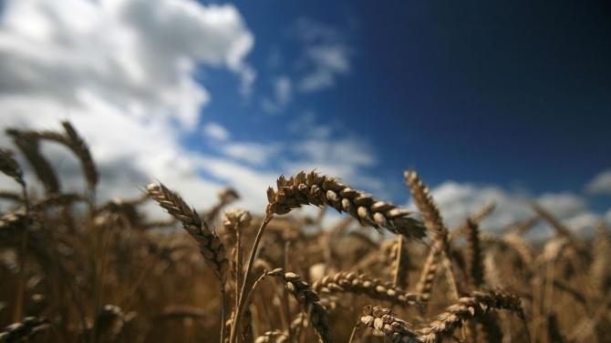 Русия ограничава износа на зърнени култури в опит да овладее цените на храните