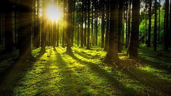 """WWF и ЮЗДП ще възстановяват гори в пет зони от екологичната мрежа """"Натура 2000"""""""