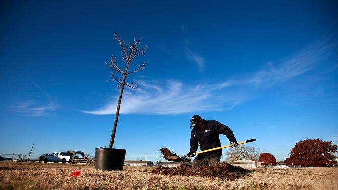Близо 5000 нови дървета са засадени в градска среда тази есен в Софи